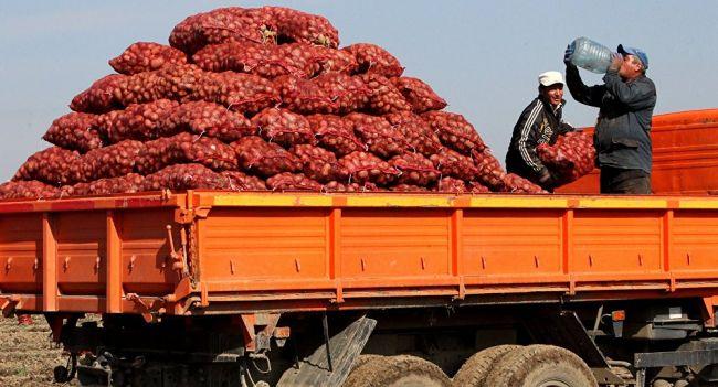 В Узбекистане отменили ввозную пошлину на картофель